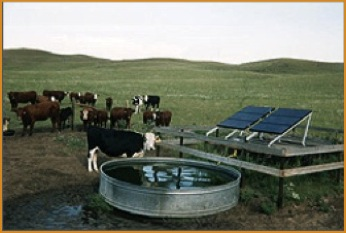 cowswithtankandsolarpanels