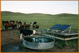 cows with tank and solar panels